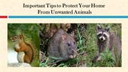 Important Tips to Protect Your Home From Unwanted Animals