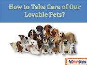 Take Care of your Dog with Pet Drivers License