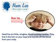 Never Lice Give You A Lice Free Head And Maintain Hygiene