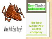The best Mouse Pest Control company