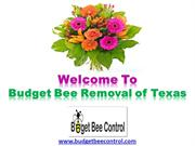 Houston Bee Removal