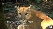 final presentation for florida panther