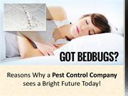 Reasons Why a Pest Control Company sees a Bright Future Today!