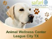 Best and Affordable Pet Care Services at Safari Vet, League City TX