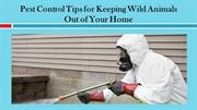 Pest Control Tips for Keeping Wild Animals Out of Your Home