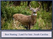 Best Hunting | Land For Sale | South Carolina