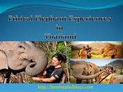 Ethical Elephant Experiences in Thailand