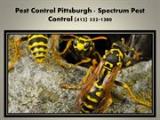 Pest Control Pittsburgh