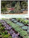 Mybageecha Is The Best Resource To Buy Cactus And Succulent Plants