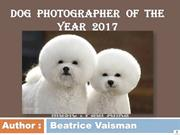 Dog  photographer  of  the  year  2017