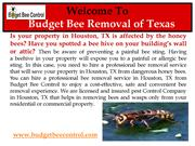 Professional bee hive removal in Texas
