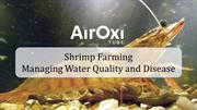 Shrimp Farming managing Water Quality and Disease - AirOxi Tube
