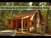 The Reason to Start Homesteading Today (1)