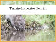 How Termite Inspection Penrith Can Help to Wipe Out Termites