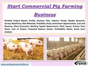 Start Commercial Pig Farming Business
