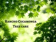 Convenient Tree Trimming - Rancho Tree Care
