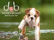 Dog Boarding Service In singapore