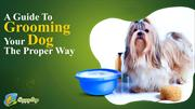 A Guide To Grooming Your Dog The Proper Way