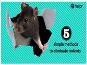 5 simple methods to eliminate rodents from your home 2