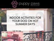 Indoor Activities For your Dog On Hot Summer Days