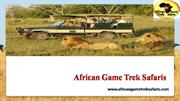 Planning On Booking A Safari Tours In Kenya?
