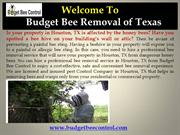 Houston bee removal service