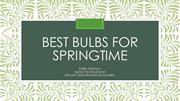 Best bulbs for springtime