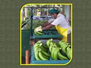 Agro Fruits – Various Needs and Benefits