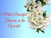 5 Most Beautiful Flowers in the World