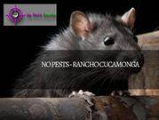 Get Rid of Rats with No Pest Rancho Cucamonga