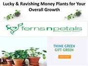 Money Plants for Overall Growth