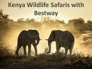 Kenya Wildlife Safaris with Bestway