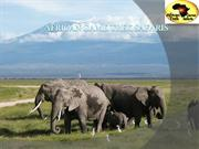 Are You Looking for the Best Kenya Adventure Safaris