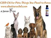 CBD Oil for Pets Things You Need to Know