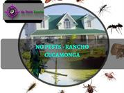 Ultimate Exterminator Service in Rancho Cucamonga