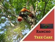 Upland tree trimming and removal in Montclair & Fontana