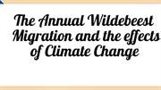 Effects of climate change on wildebeest migration
