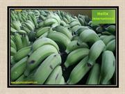 Add Cavendish Bananas in Your Diet on a Daily Basis
