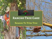 Get Upland tree trimming and removal