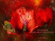 1-Aug 26-SUMMER Red Hot Flowers-El Toro-Guitar Flamenco
