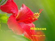 1-Sep 02-Summer  Flowers-Hibiscus-Solamente Una Vez-Guitar