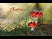 1-Sep 06-MUSHROOMS-Nocturne-Richard   Clayderman piano