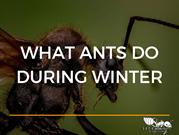 What ants do during winter.