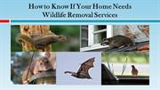How to Know If Your Home Needs Wildlife Removal Services