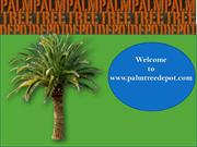 Weather Care Tips for Palm Trees