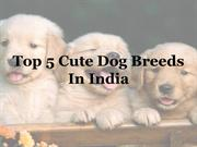 Top 5 Cute Dog Breeds in India