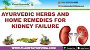 Kidney Failure Treatment - Ayurvedic Herbs & Home Remedies