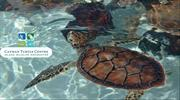 King of all Grand Cayman excursions the Turtle centre.