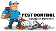 Hire Pest Control Services To Get Rid Of Pests & Termites.