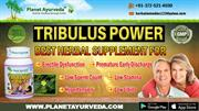 Tribulus Power -  Information, Benefits & Side Effects